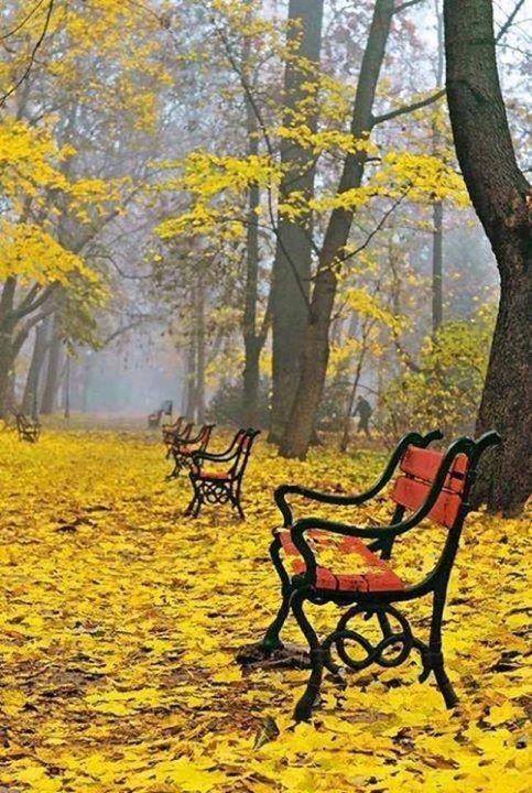Autumn (13)