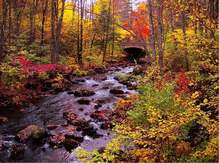 Autumn (7)