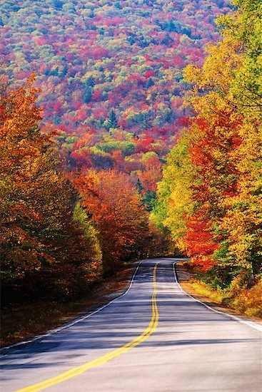 Autumn (9)