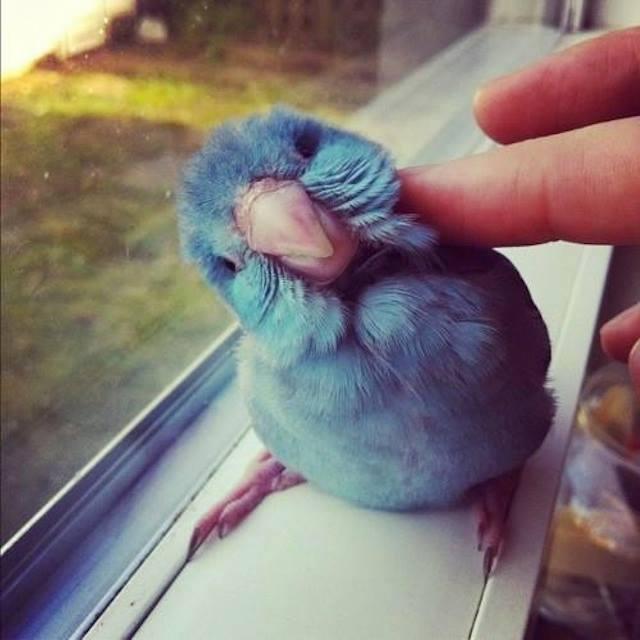 Baby-Birds (1)