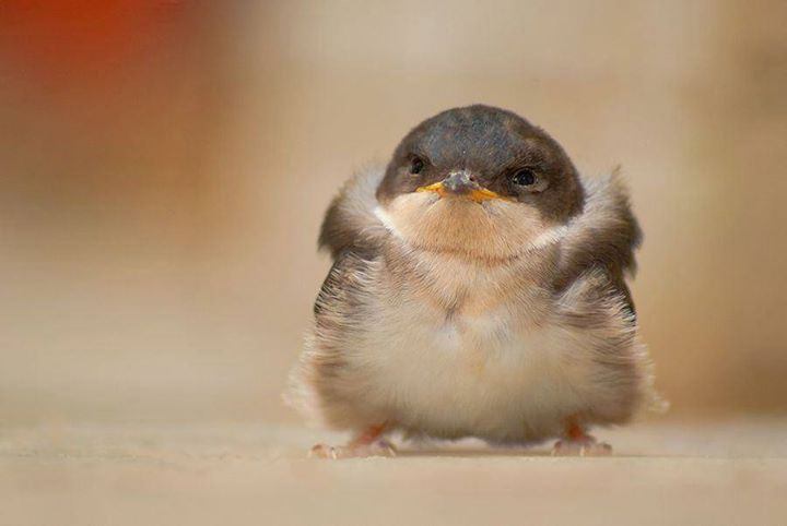 Baby-Birds (11)