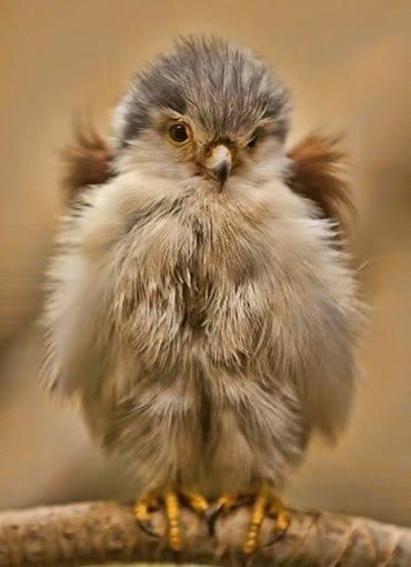Baby-Birds (9)