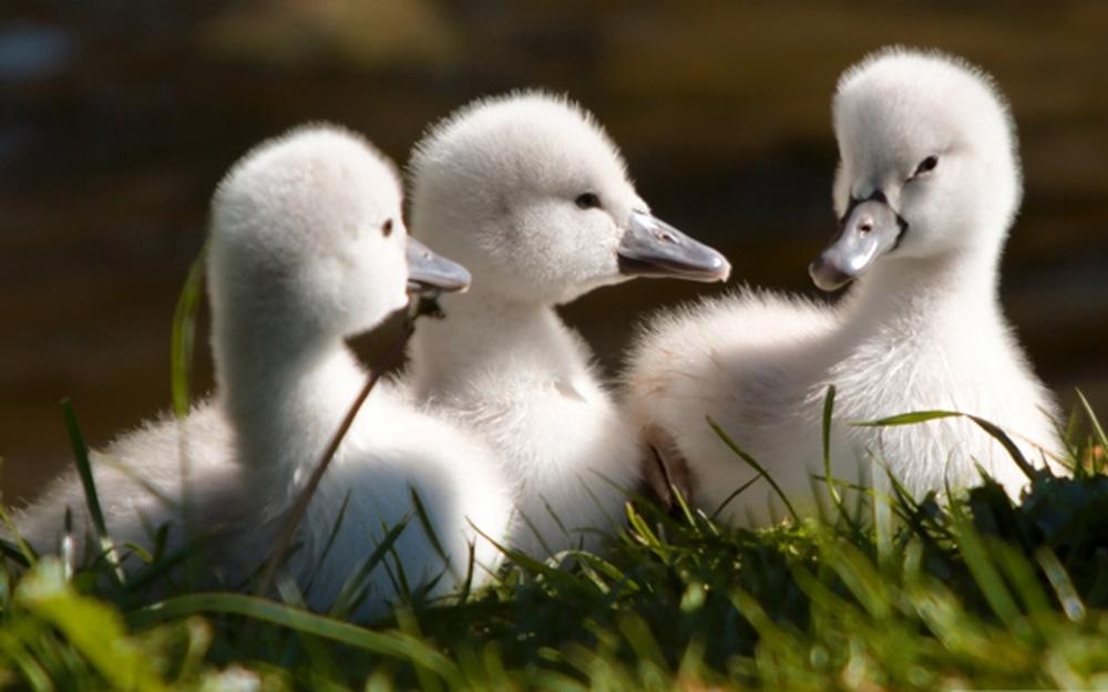 Cute Baby Birds (11 Photos)