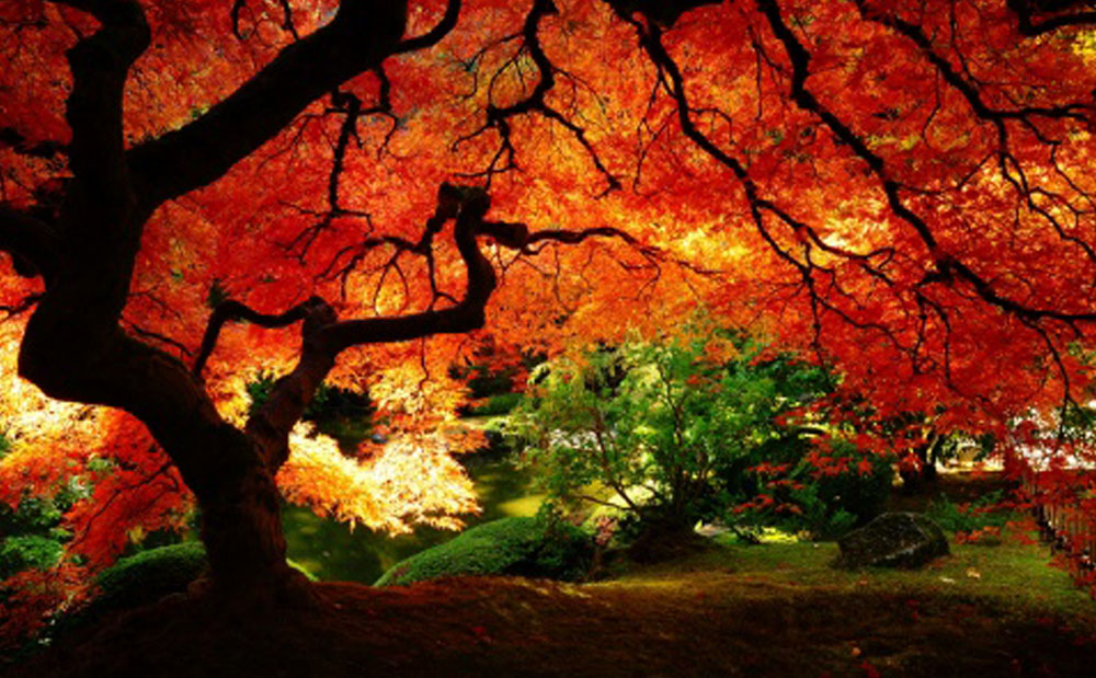 Beautiful Autumn (14 Photos)