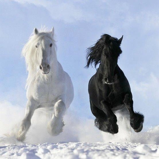 Beautiful-Horses (1)