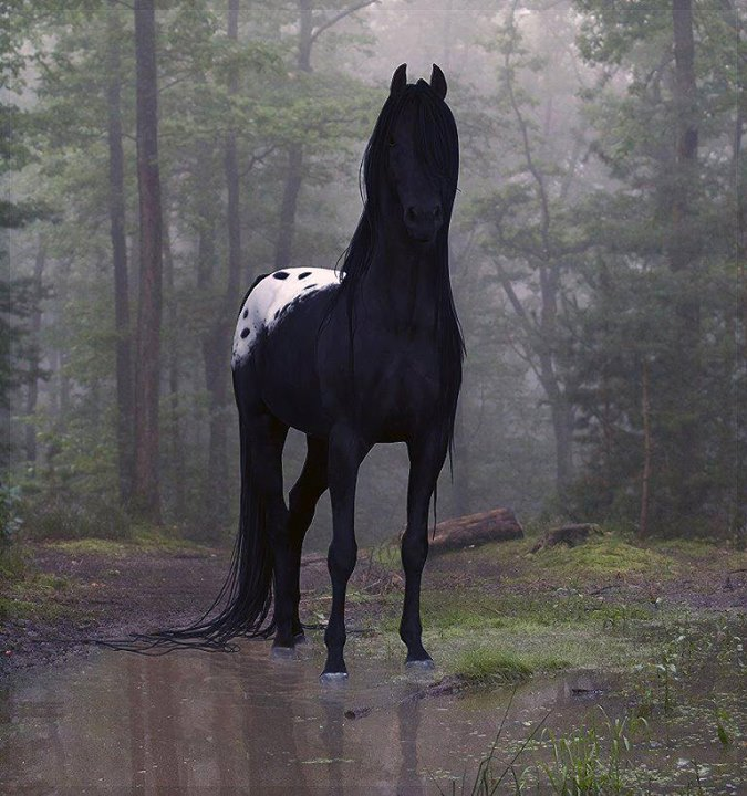 Beautiful-Horses (10)
