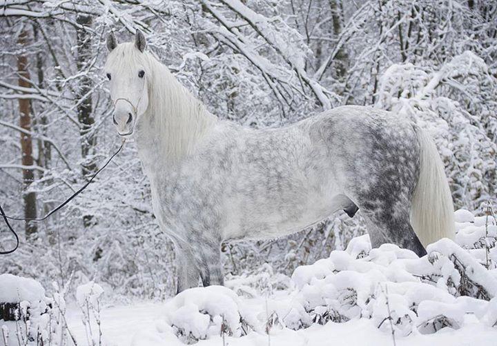 Beautiful-Horses (3)