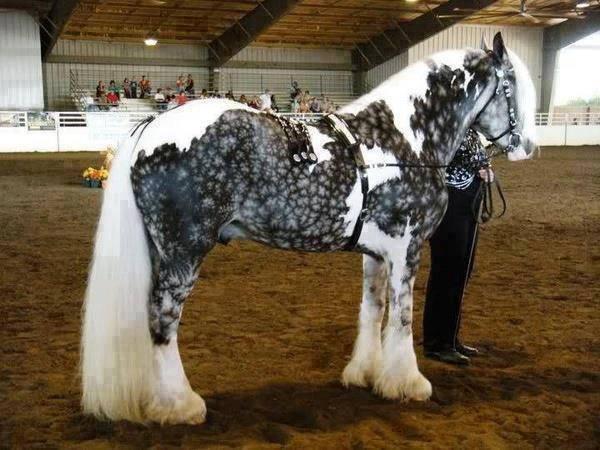 Beautiful-Horses (4)