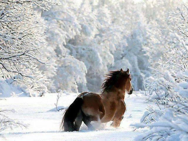 Beautiful-Horses (5)