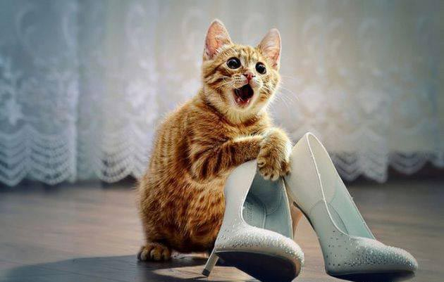 Funny-Cats (5)