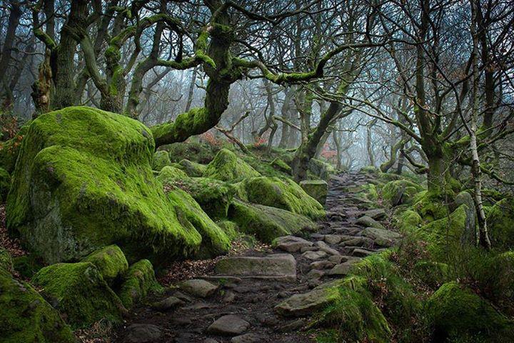Magical-Paths (1)