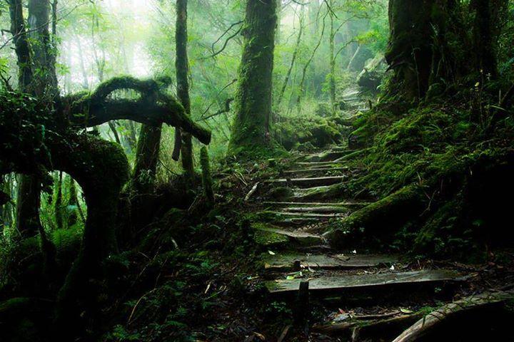 Magical-Paths (11)