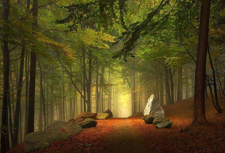 Magical-Paths (4)