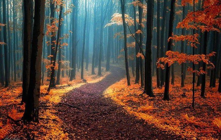 Magical-Paths-5