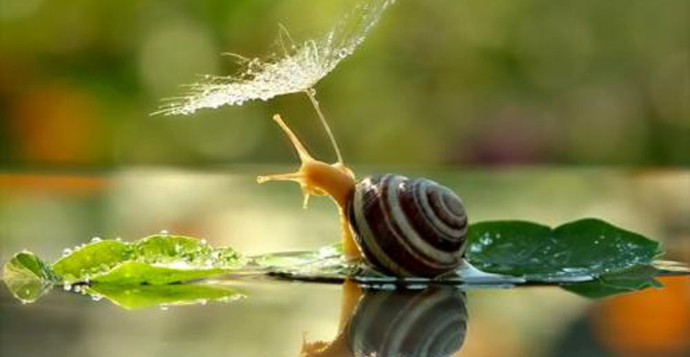 Most Beautiful Snails (5 Photos)