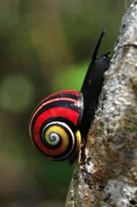 Snails (3)