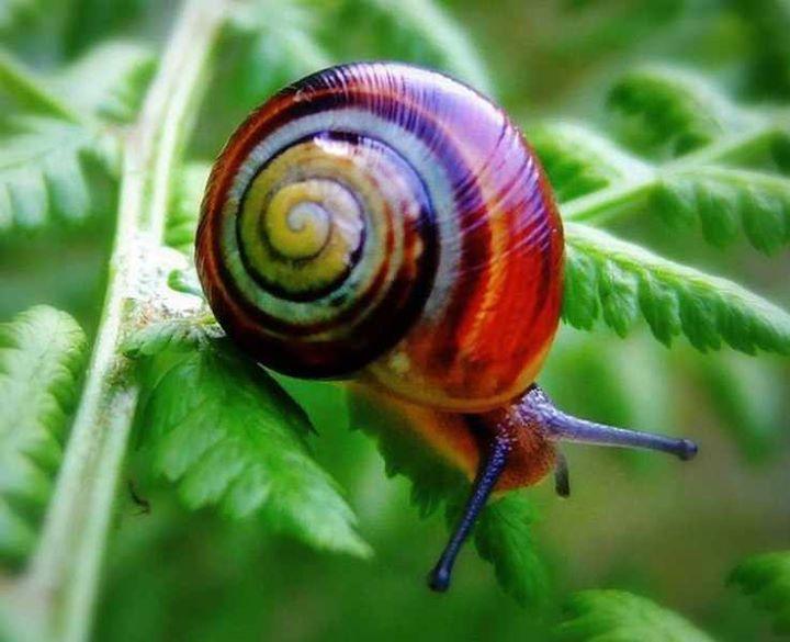 Snails (5)