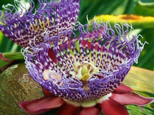 Amazing-Flower (3)