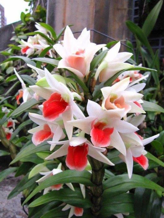 Amazing-Flower (7)