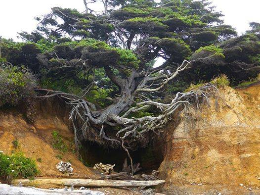 Amazing-Nature (1)