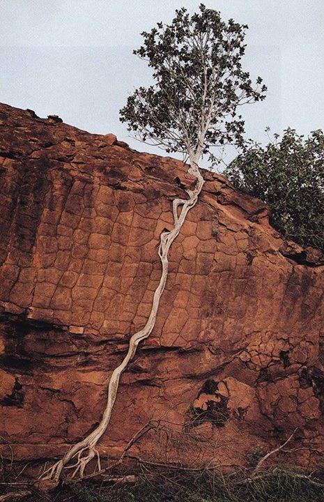 Amazing-Nature (10)