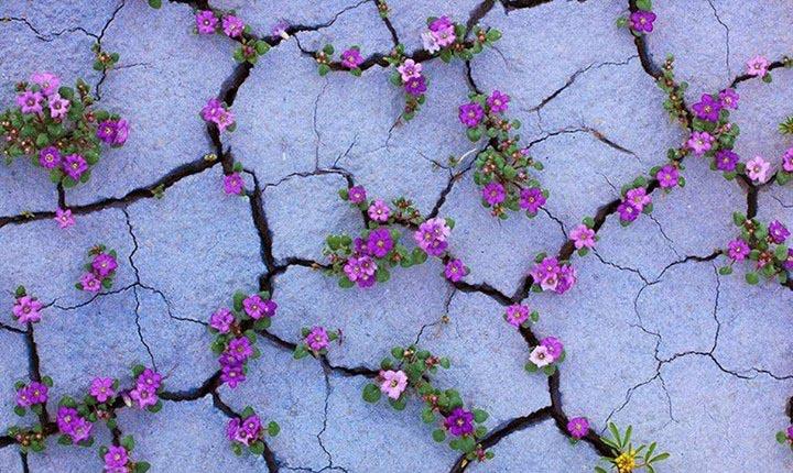 Amazing-Nature (13)