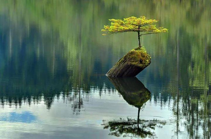 Amazing-Nature (18)