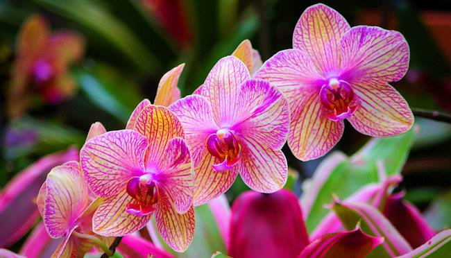 Beautiful-Orchids (1)