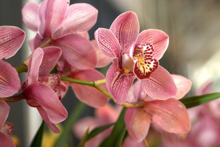Beautiful-Orchids (3)