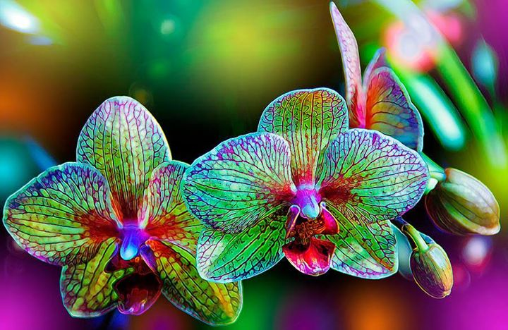 Beautiful-Orchids (6)