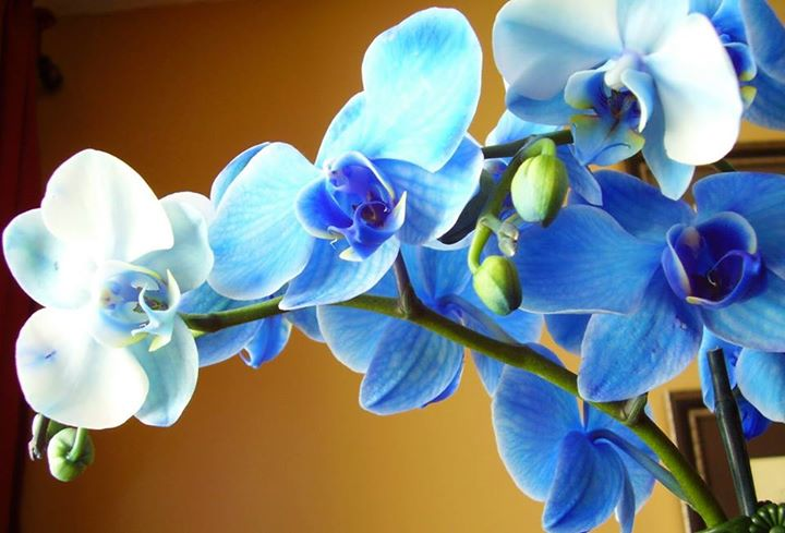 Beautiful-Orchids (7)