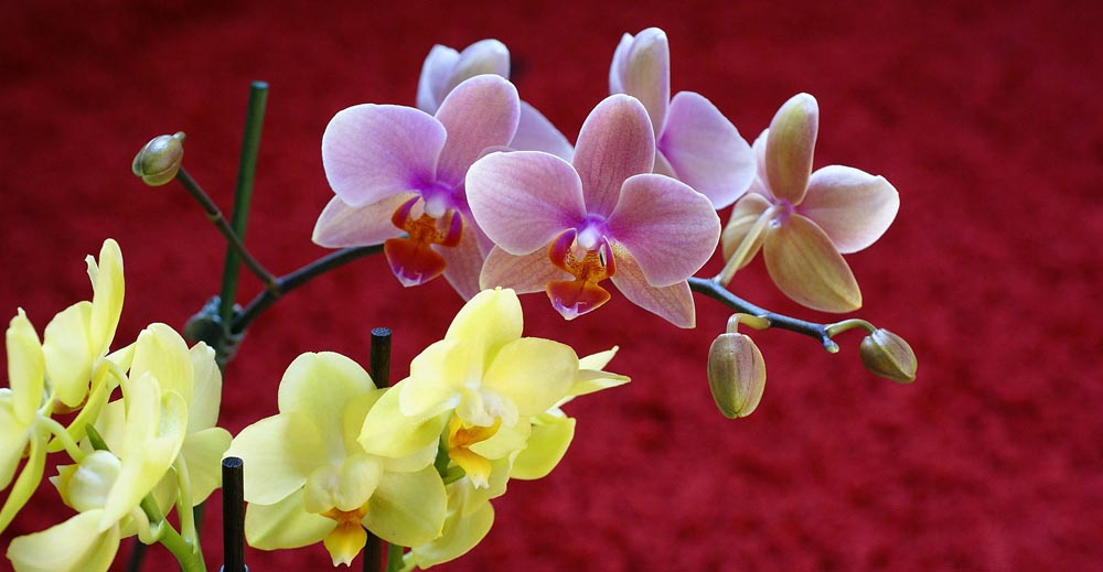 Extremely Beautiful Orchids (10 Photos)