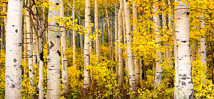 A Beautiful Forest in Colorado, United States (6 Photos)