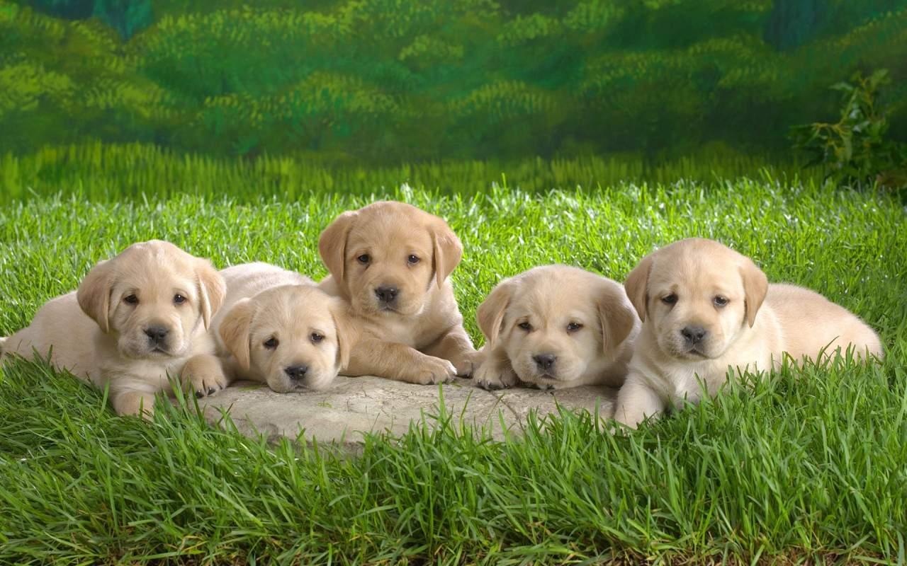 Cute Puppies (14 Photos)