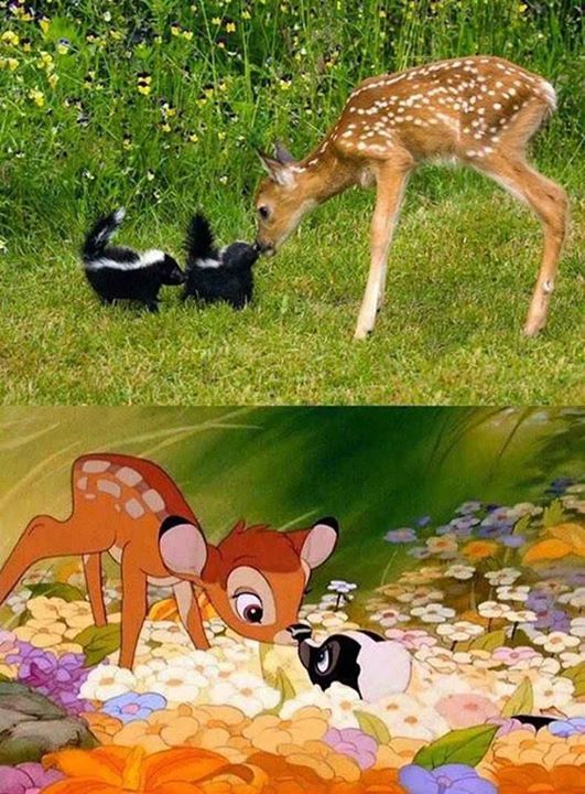 Disney-Animals-in-Real-Life (1)