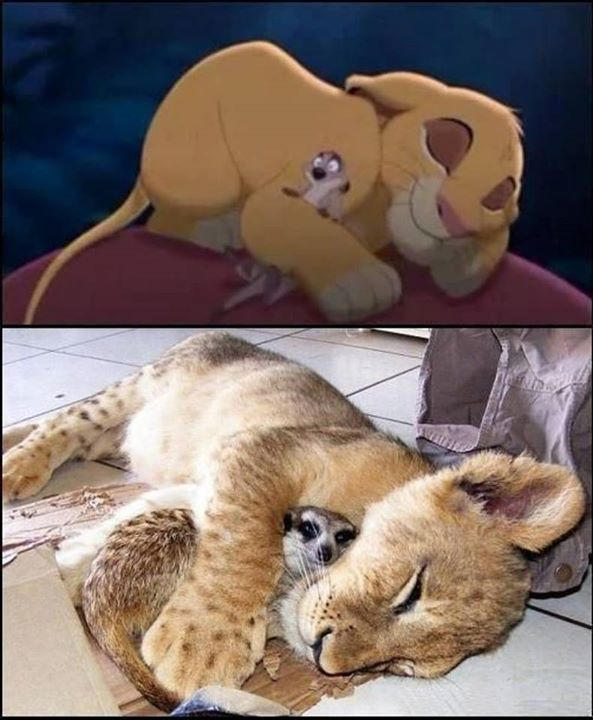 Disney-Animals-in-Real-Life (11)