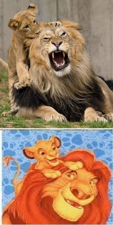 Disney-Animals-in-Real-Life (2)