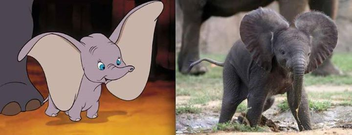 Disney-Animals-in-Real-Life (3)