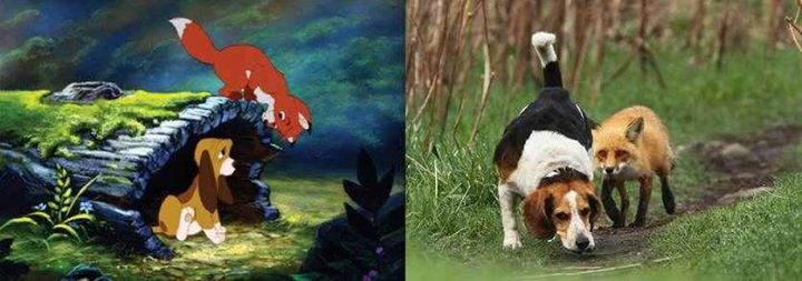 Disney-Animals-in-Real-Life (6)