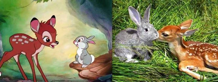 Disney-Animals-in-Real-Life (9)