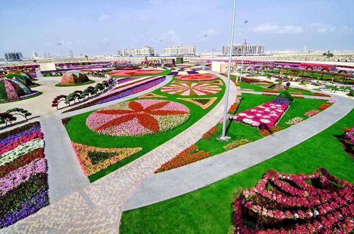 Dubai-Miracle-Garden (3)