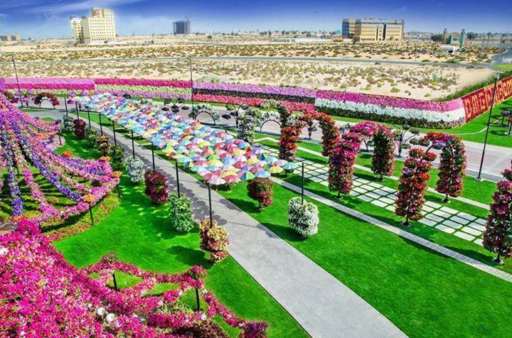 Dubai-Miracle-Garden (4)