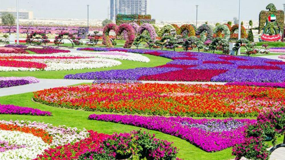 Dubai Miracle Garden (5 Photos)