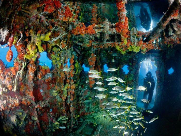 Underwater (6)