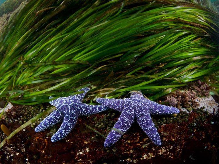 Underwater (7)