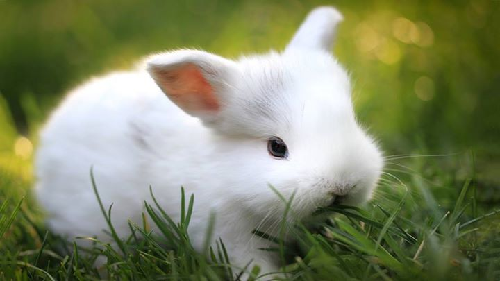 White-Animals (11)
