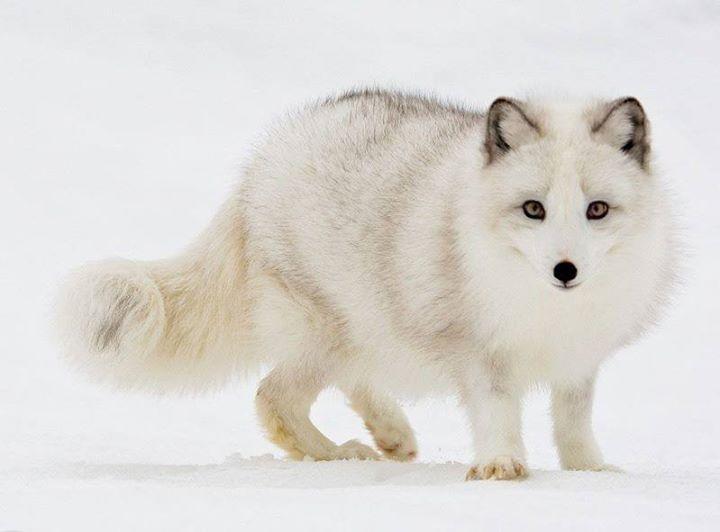 White-Animals (12)