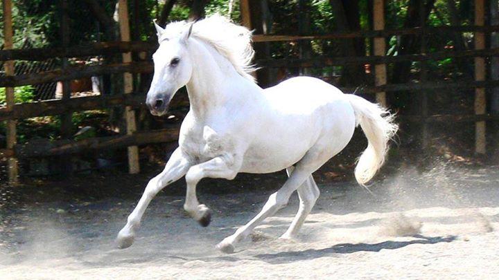 White-Animals (13)