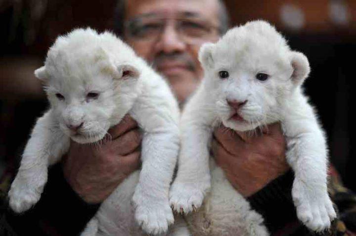 White-Animals (15)