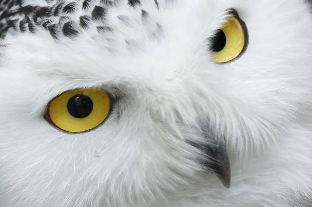 White-Animals (16)